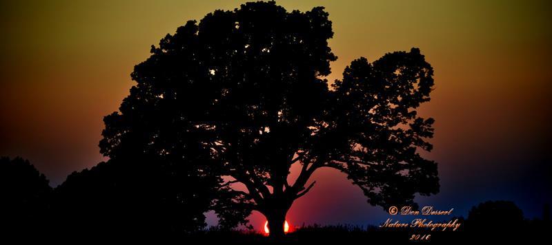 Sunset_Tree_Top_800